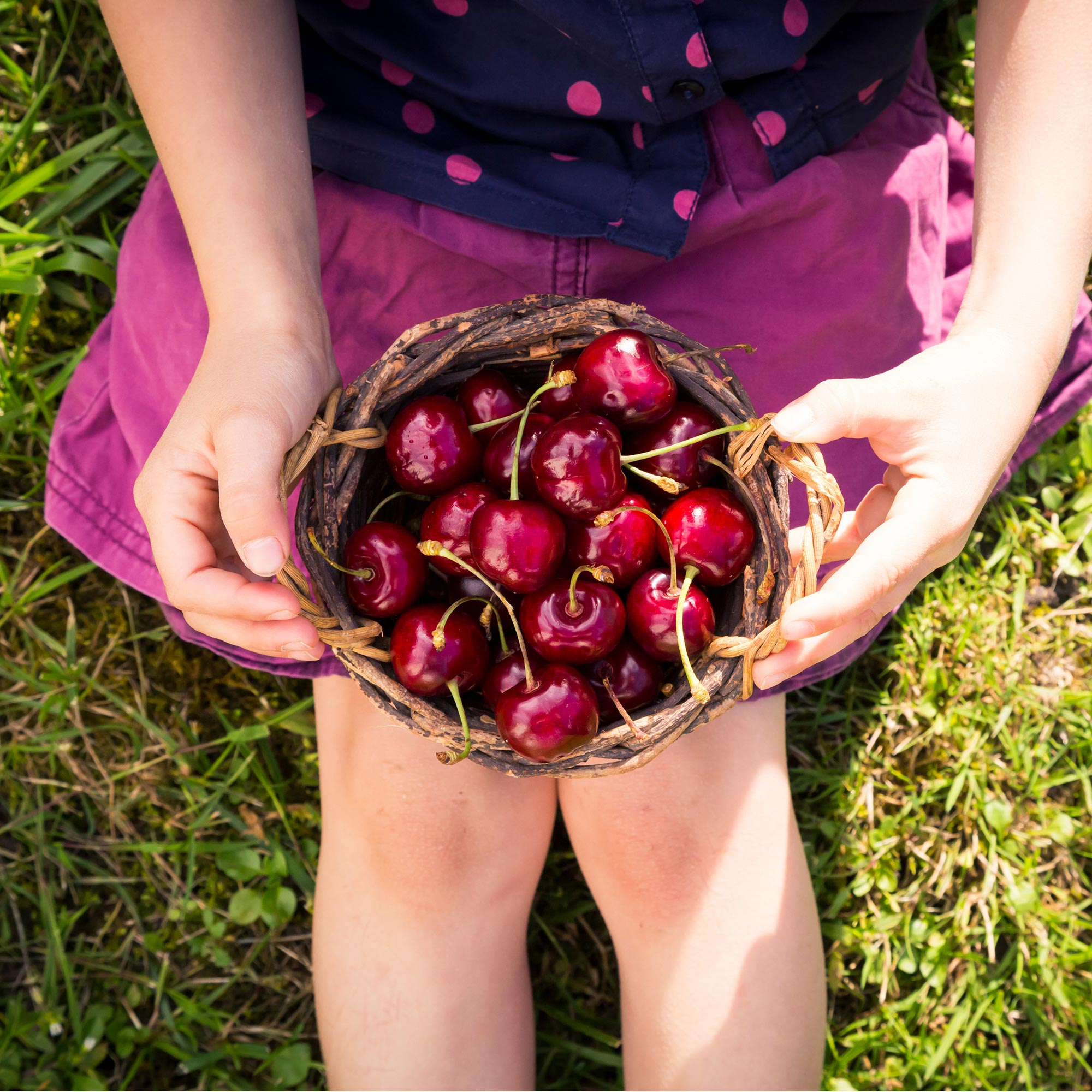 Girl sitting in the grass holding a basket of cherries.